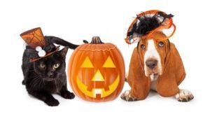 Pets-dog-cat-halloween