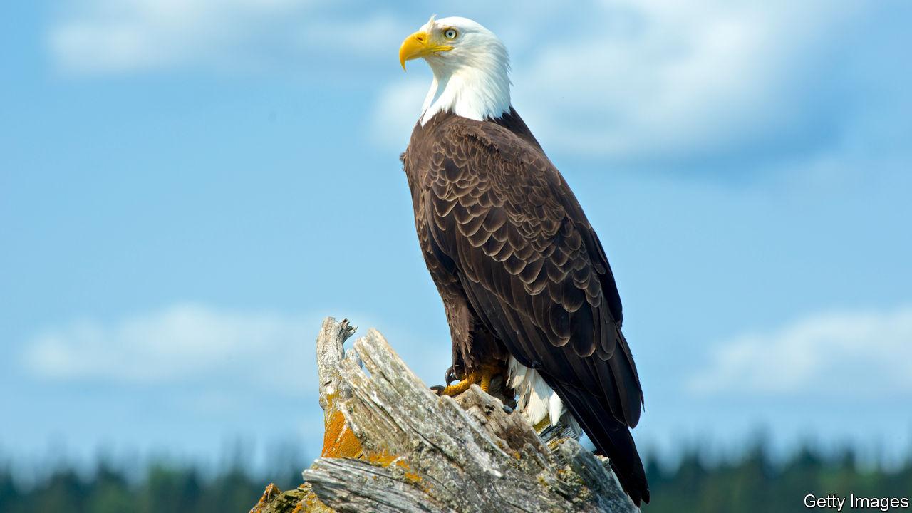 - Fun Fact Friday Bald Eagle Alliance Work Partners