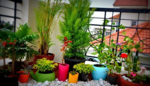 Serenity Now! Balcony Gardening Tips | Alliance Work Partners