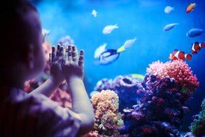 child_watching_fish_swim
