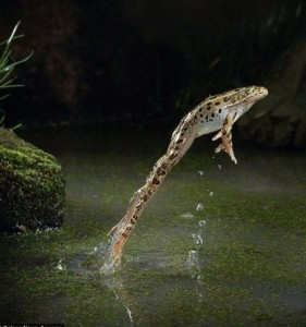 frog_jump_2