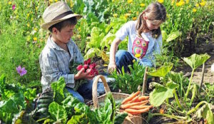 harvest-home-garden