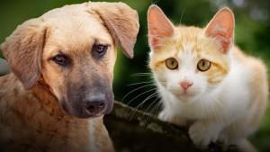 pets-heat-safety