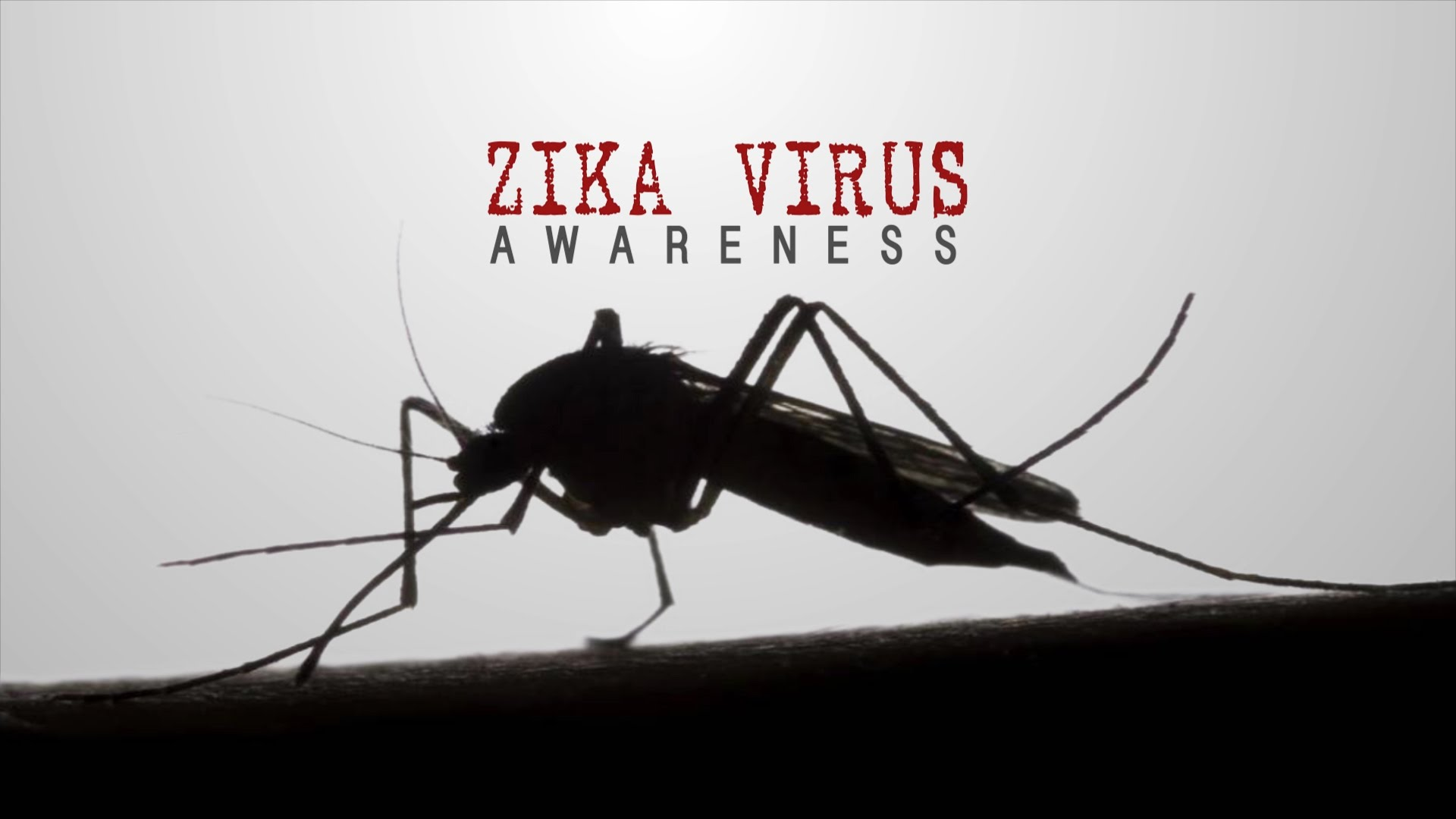 Zika Prevention Controlling Mosquitoes At Home Alliance